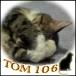 TOM106