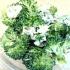 簡単鍋料理の定番!!「白菜と豚肉のミルフィーユ鍋」献立