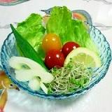 白ワインビネガー・ドレッシングのサラダ~♥