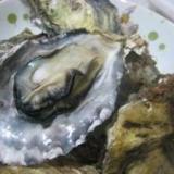 殻付き牡蠣 レンジで簡単 プリプリ♪