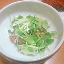 ピリリ生姜が効いたカイワレ納豆