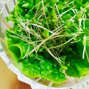 切るだけ!スプラウトとサンチュの緑の簡単サラダ