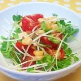 貝割れ&ミニトマトのサラダ