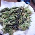 春の山菜~たらの芽の天ぷら