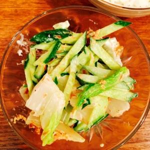 白菜ときゅうりのおかかサラダ