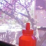 八重桜のシロップ