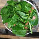 カルシウムたっぷり生で食べる小松菜
