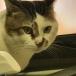 猫のお餅丸