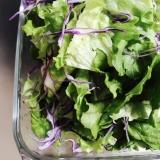 グリーンリーフと紫キャベツの魔女サラダ?