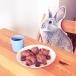 ネバーランドウサギ