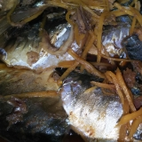 圧力鍋で簡単★骨まで軟らかな鯵の生姜梅煮