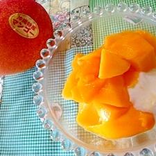完熟マンゴーのヨーグルト
