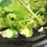 クレソンとキュウリのグリーンサラダ