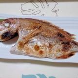 お食い初めの鯛++