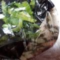 まとめて茹でて常備菜 青菜のお浸し♪