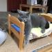 灰色ネコのご飯係