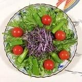 リーフレタスとアスパラのサラダ