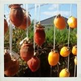 しっかりドライ もっちり干し柿