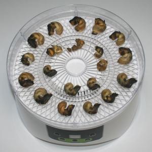 簡単おつまみ珍味☆食品乾燥機で乾燥ばい貝
