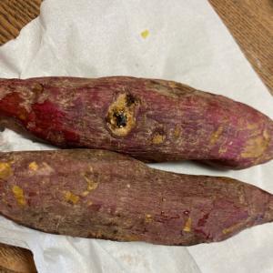 我が家の畑で取れた新芋でやきいも