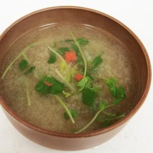豆苗と人参の味噌汁