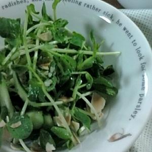 豆苗グリーンサラダ