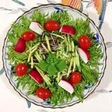 ラディッシュ、リーフレタス のサラダ