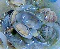 玉ネギとアサリのスープ