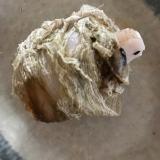 豆餅のピリ辛トロロ昆布巻き