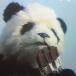 *panda-chan*