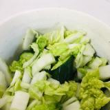 白菜ときゅうりの塩もみサラダ