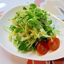豆苗、大根、キャベツのサラダ