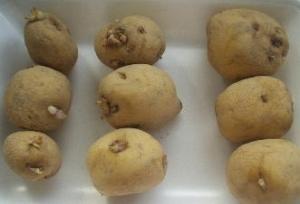 ジャガイモの保存法