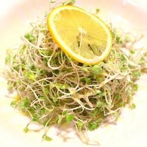 ブロッコリースプラウトのヨーグルトサラダ