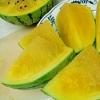 ●西瓜●種を見せない飾り切り~科学と料理のコラボ~