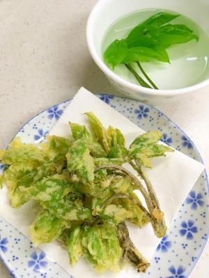 コシアブラ 山菜の天ぷら
