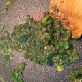 失敗なし! 白葱の青い部分で作るネギ味噌!