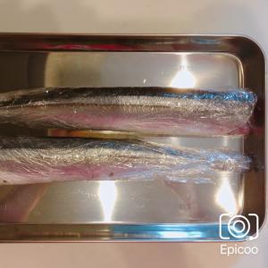 秋刀魚の簡単内臓処理&長持ち保存方法