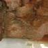 豚のケチャップ生姜焼き