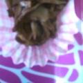 舞茸の柚子胡椒ソテー