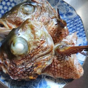 鯛のかぶと焼き
