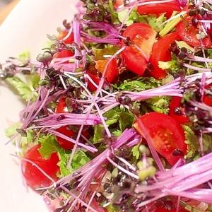 青パパイアと紫キャベツの新芽のエスニック風サラダ