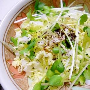 かいわれ大根と白菜のゆかり和え