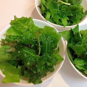 栄養たっぷり☆プチベールの簡単サラダ