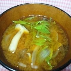 コシアブラ しめじ 玉ねぎのお味噌汁