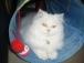 kitty6589