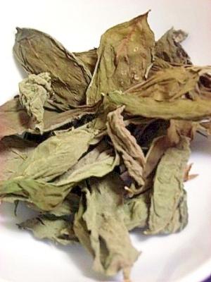 生バジルの保存方法|楽天レシピ