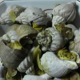 つぶ貝のしょうが煮