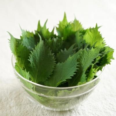 余った大葉はどう使う?夏にぴったりな大葉の大量消費レシピ5選
