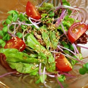 ラディッシュの新芽とサニーレタスの中華風サラダ